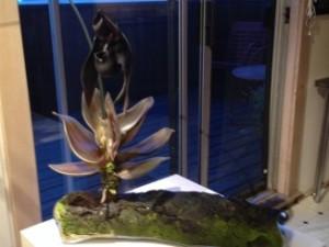 Debra Moore Orchid